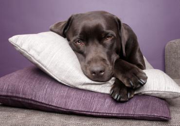 Hotel para seu cão, você conhece as vantagens?