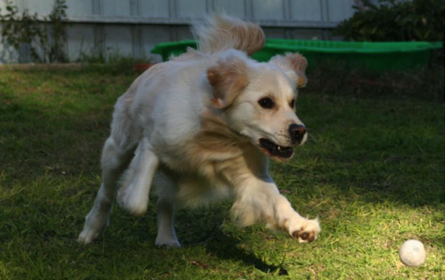 Vantagens da creche para seu cão