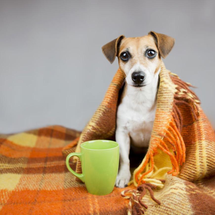 Saúde: Gripe Canina? Atchhhim!